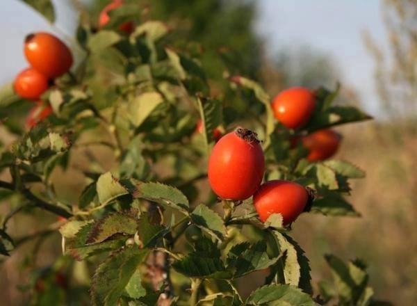 Bylinky na podzim-setkání s bylinkářkou Věrou-bylinková poradna 1